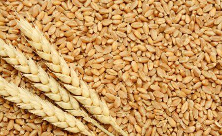 El grano de trigo: características generales y algunas problemáticas y soluciones a su almacenamiento