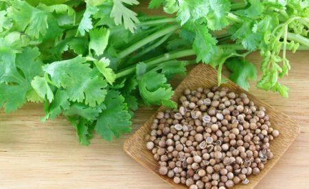 Extracción, composición y caracterización de los aceites esenciales de hoja y semilla de cilantro (Coriandrum sativum)