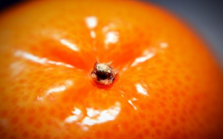 Investigaciones recientes en recubrimientos comestibles aplicados en alimentos