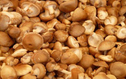 Aspectos relacionados con la producción de Lentinula edodes (shiitake): una seta con alto potencial alimenticio y medicinal