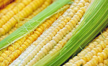 Cinética de deshidratación por liofilización de maíz para la elaboración de botanas