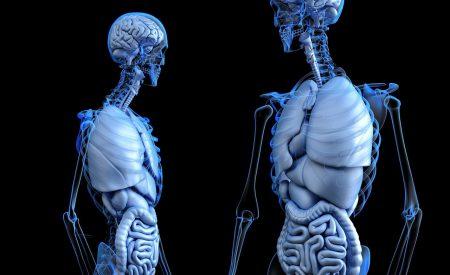 Probióticos: resistencia gastrointestinal y microencapsulación