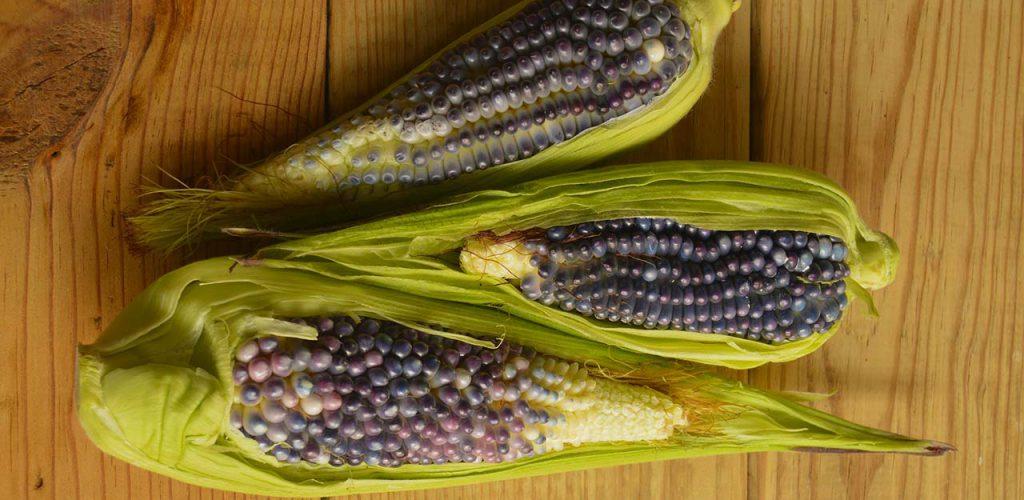Propiedades nutricionales y antioxidantes del maíz azul (Zea mays L.)