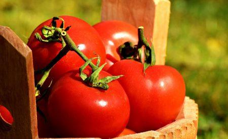 El jitomate (Solanum lycopersicum): aporte nutrimental, enfermedades postcosecha y tecnologías para su almacenamiento en fresco